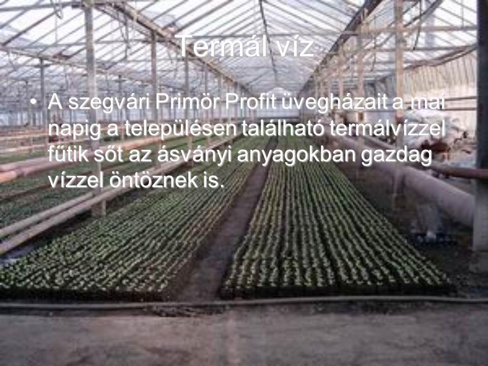 Termál víz A szegvári Primör Profit üvegházait a mai napig a településen található termálvízzel fűtik sőt az ásványi anyagokban gazdag vízzel öntöznek