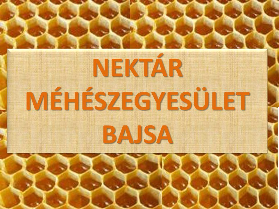 RÖVIDEN AZ EGYESÜLETRŐL  2002 december 21.-én alakult meg 20 alapító taggal  Az egyesület önálló,önkéntes alapú,pártatlan szervezet  Céljai és feladatai: A méhészek jogainak védelme A tagok közötti kölcsönös szolidaritás ápolása A korszerű méhészet fejlesztése Méhészeti eszközök és gyógyszerek,valamint szakirodalom beszerzése Környezetvédelem Együttműködés kiépítése a többi helyi,illetve környékbeli egyesülettel
