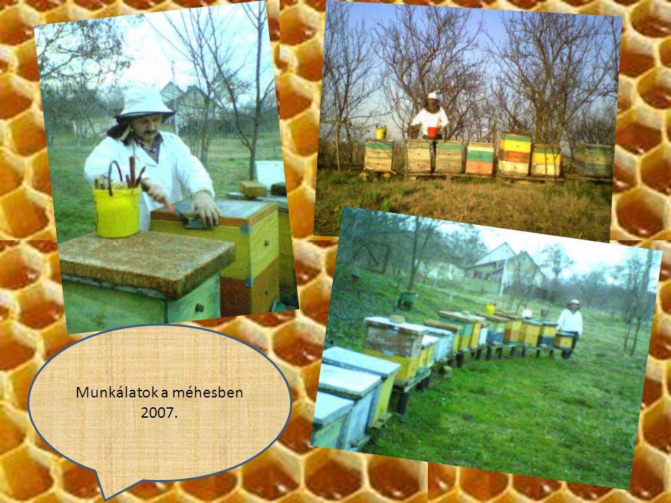 Munkálatok a méhesben 2007.