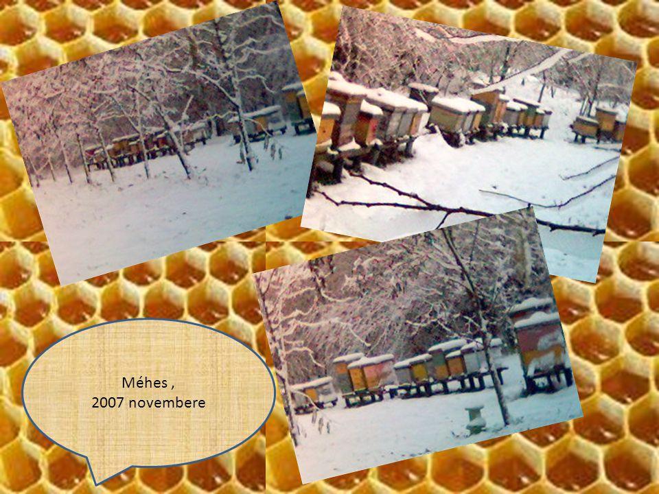 Méhes, 2007 novembere