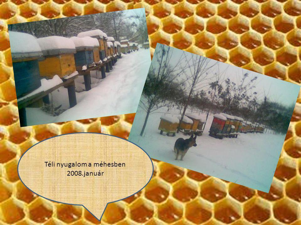 Téli nyugalom a méhesben 2008.január