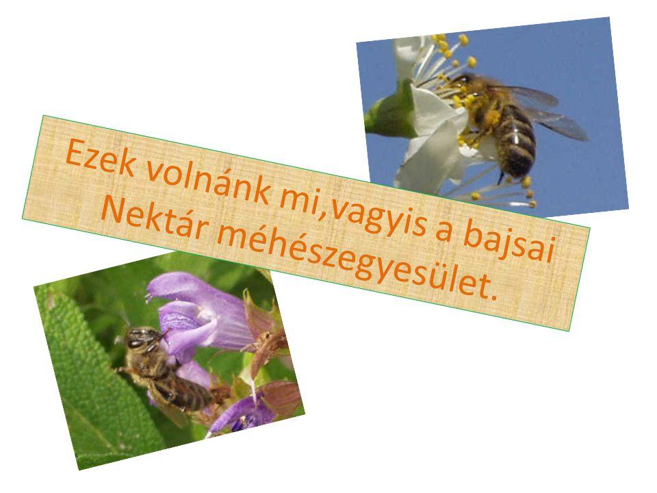 Ezek volnánk mi,vagyis a bajsai Nektár méhészegyesület.