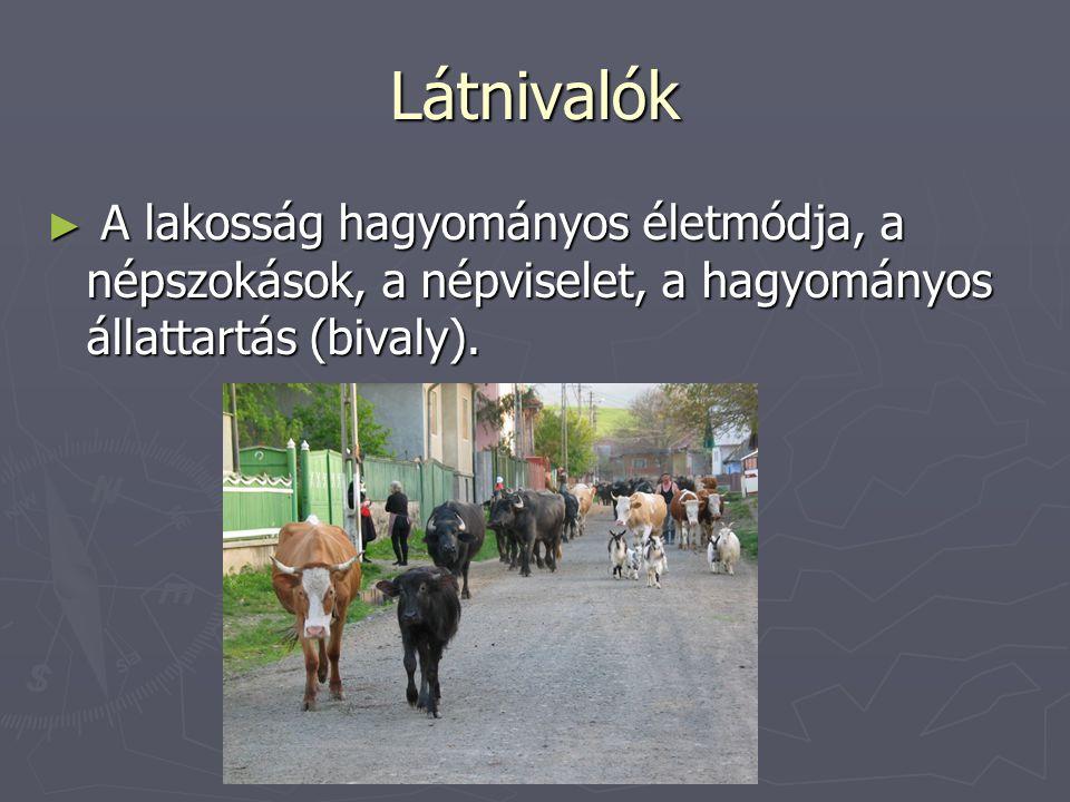 Látnivalók ► A lakosság hagyományos életmódja, a népszokások, a népviselet, a hagyományos állattartás (bivaly).