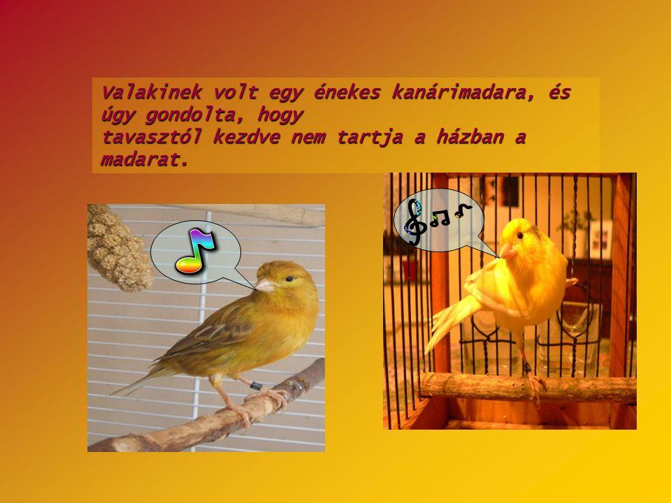 Valakinek volt egy énekes kanárimadara, és úgy gondolta, hogy tavasztól kezdve nem tartja a házban a madarat.