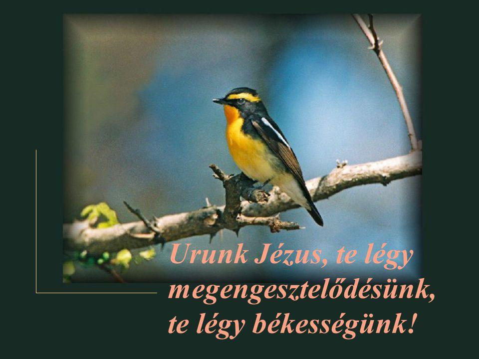 Urunk Jézus, te légy megengesztelődésünk, te légy békességünk!