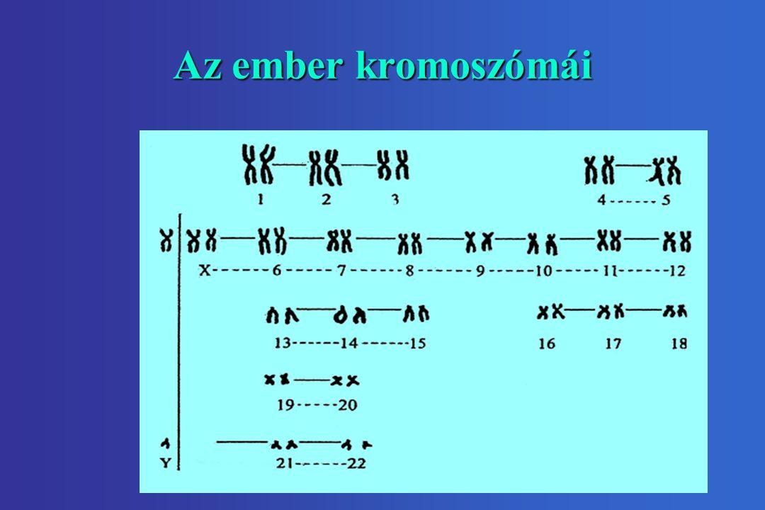 Az ember kromoszómái