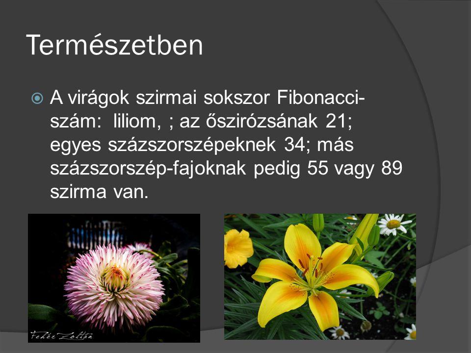 Természetben  A virágok szirmai sokszor Fibonacci- szám: liliom, ; az őszirózsának 21; egyes százszorszépeknek 34; más százszorszép-fajoknak pedig 55