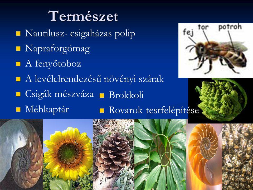 Nautilusz- csigaházas polip Napraforgómag A fenyőtoboz A levélelrendezésű növényi szárak Csigák mészváza MéhkaptárTermészet Brokkoli Rovarok testfelépítése