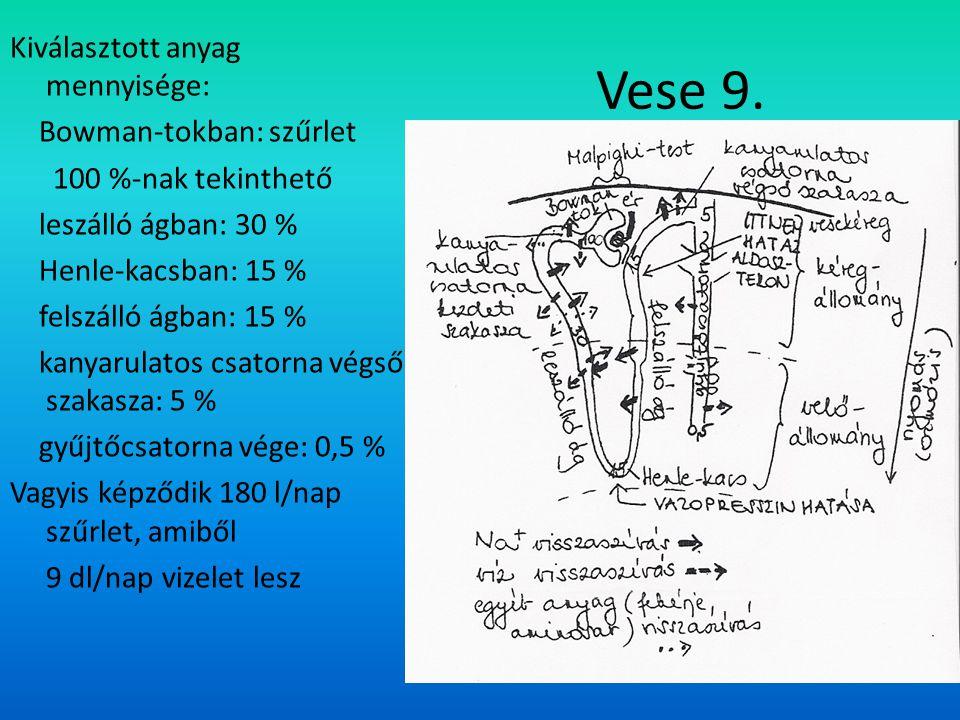 Vese 9. Kiválasztott anyag mennyisége: Bowman-tokban: szűrlet 100 %-nak tekinthető leszálló ágban: 30 % Henle-kacsban: 15 % felszálló ágban: 15 % kany