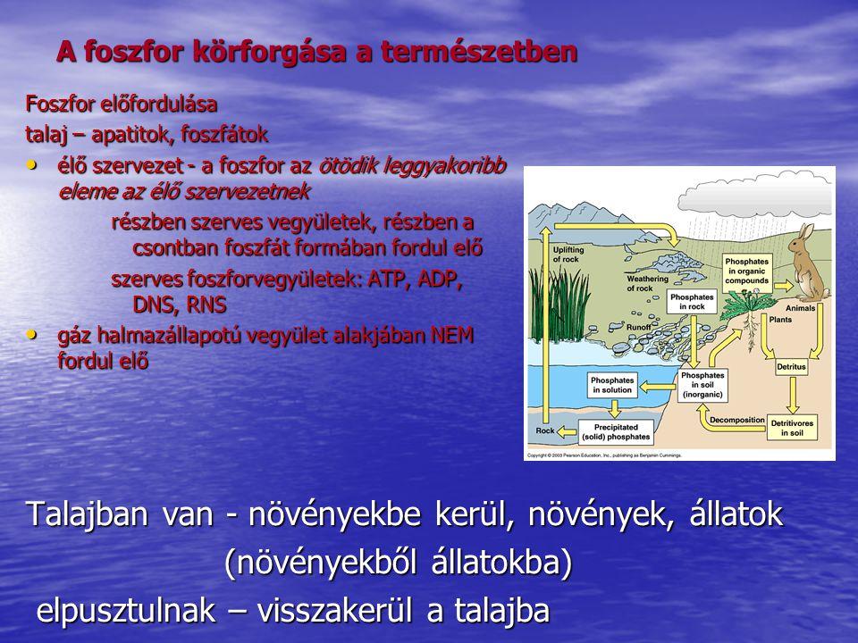 A foszfor körforgása a természetben Talajban van - növényekbe kerül, növények, állatok (növényekből állatokba) (növényekből állatokba) elpusztulnak –