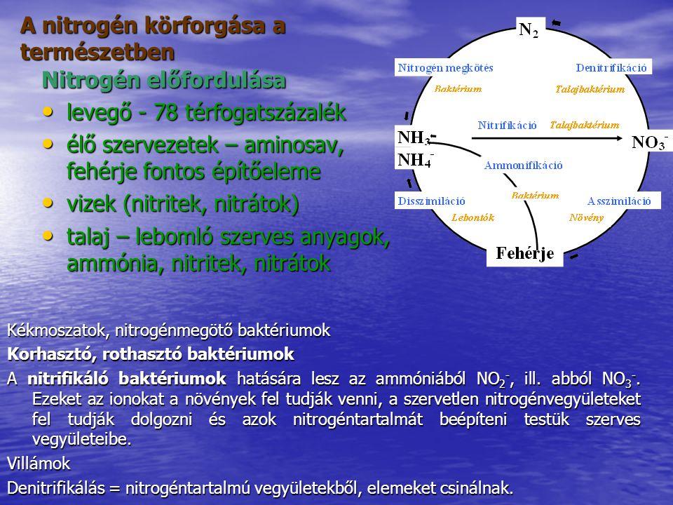 A nitrogén körforgása a természetben Kékmoszatok, nitrogénmegötő baktériumok Korhasztó, rothasztó baktériumok A nitrifikáló baktériumok hatására lesz