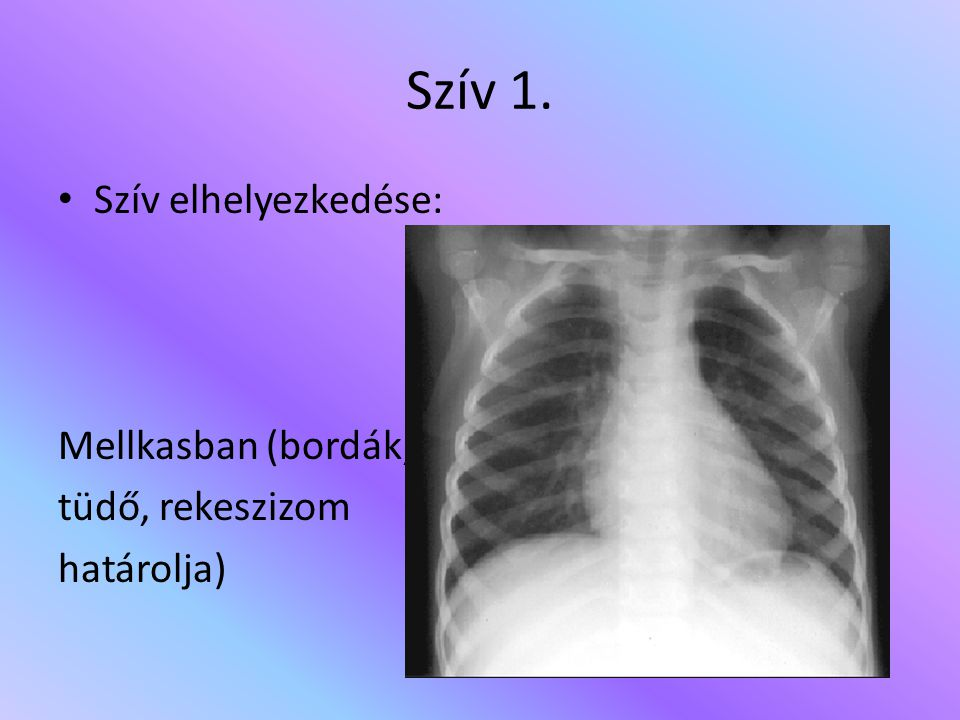 Szív 1. Szív elhelyezkedése: Mellkasban (bordák, tüdő, rekeszizom határolja)