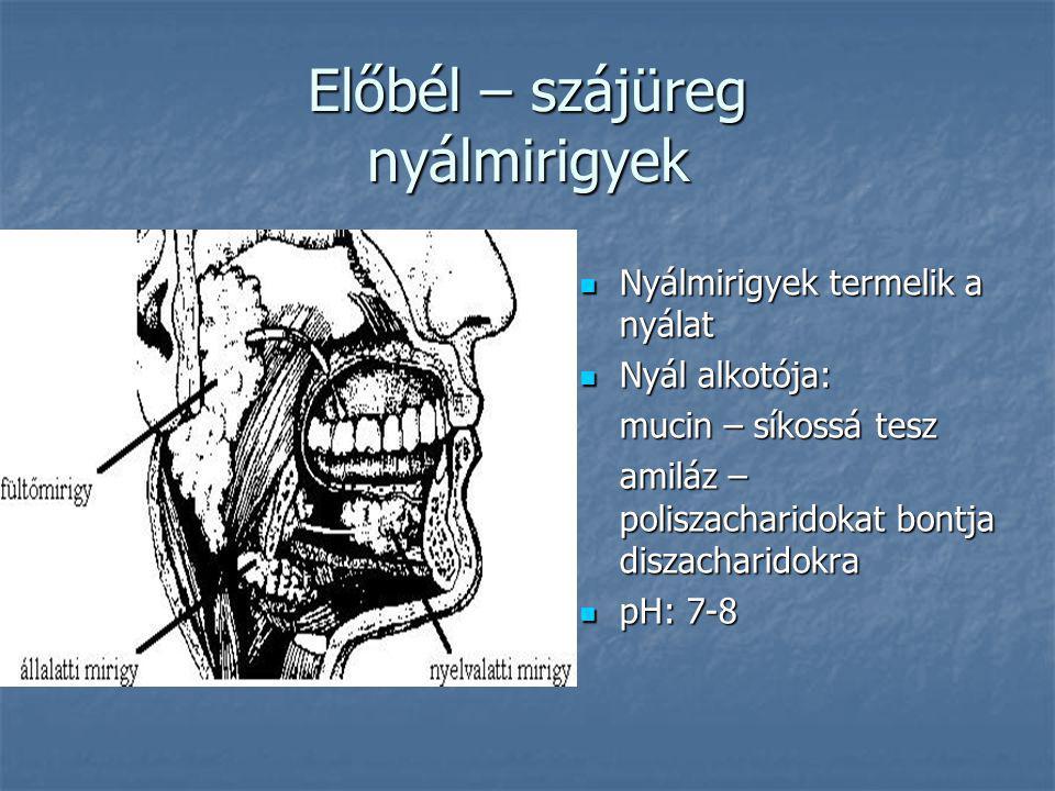 Előbél – szájüreg nyálmirigyek Nyálmirigyek termelik a nyálat Nyálmirigyek termelik a nyálat Nyál alkotója: Nyál alkotója: mucin – síkossá tesz amiláz – poliszacharidokat bontja diszacharidokra pH: 7-8 pH: 7-8