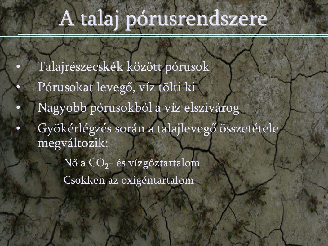 A talaj pórusrendszere Talajrészecskék között pórusok Pórusokat levegő, víz tölti ki Nagyobb pórusokból a víz elszivárog Gyökérlégzés során a talajlevegő összetétele megváltozik: Gyökérlégzés során a talajlevegő összetétele megváltozik: – Nő a CO 2 - és vízgőztartalom Nő a CO 2 - és vízgőztartalom – Csökken az oxigéntartalom Csökken az oxigéntartalom