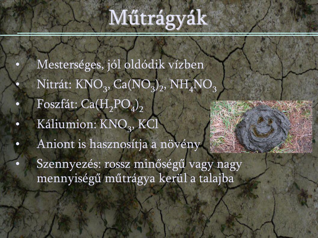Műtrágyák Mesterséges, jól oldódik vízben Nitrát: KNO 3, Ca(NO 3 ) 2, NH 4 NO 3 Foszfát: Ca(H 2 PO 4 ) 2 Káliumion: KNO 3, KCl Aniont is hasznosítja a növény Szennyezés: rossz minőségű vagy nagy mennyiségű műtrágya kerül a talajba