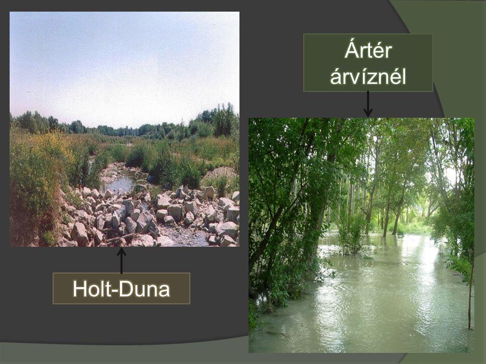  Szigetköz éghajlata kontinentális jellegű medenceéghajlat.