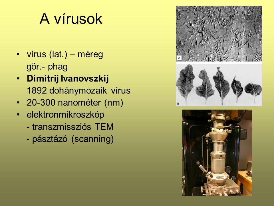 A vírusok vírus (lat.) – méreg gör.- phag Dimitrij Ivanovszkij 1892 dohánymozaik vírus 20-300 nanométer (nm) elektronmikroszkóp - transzmissziós TEM -