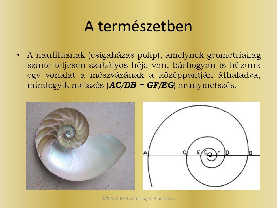 A természetben A nautilusnak (csigaházas polip), amelynek geometriailag szinte teljesen szabályos héja van, bárhogyan is húzunk egy vonalat a mészvázá