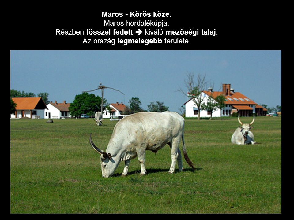 Maros - Körös köze: Maros hordalékúpja. Részben lösszel fedett  kiváló mezőségi talaj. Az ország legmelegebb területe.