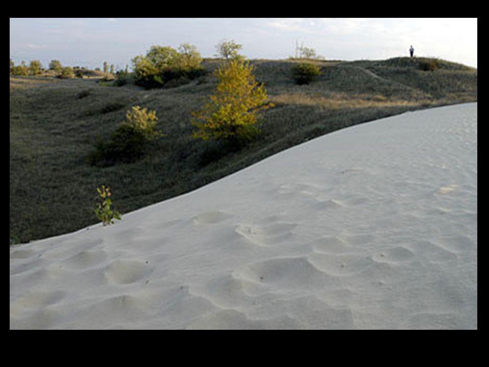 Körös-vidék: Tökéletes síkság. Öntés- és szikes talaj  rét- és legelőgazdálkodás