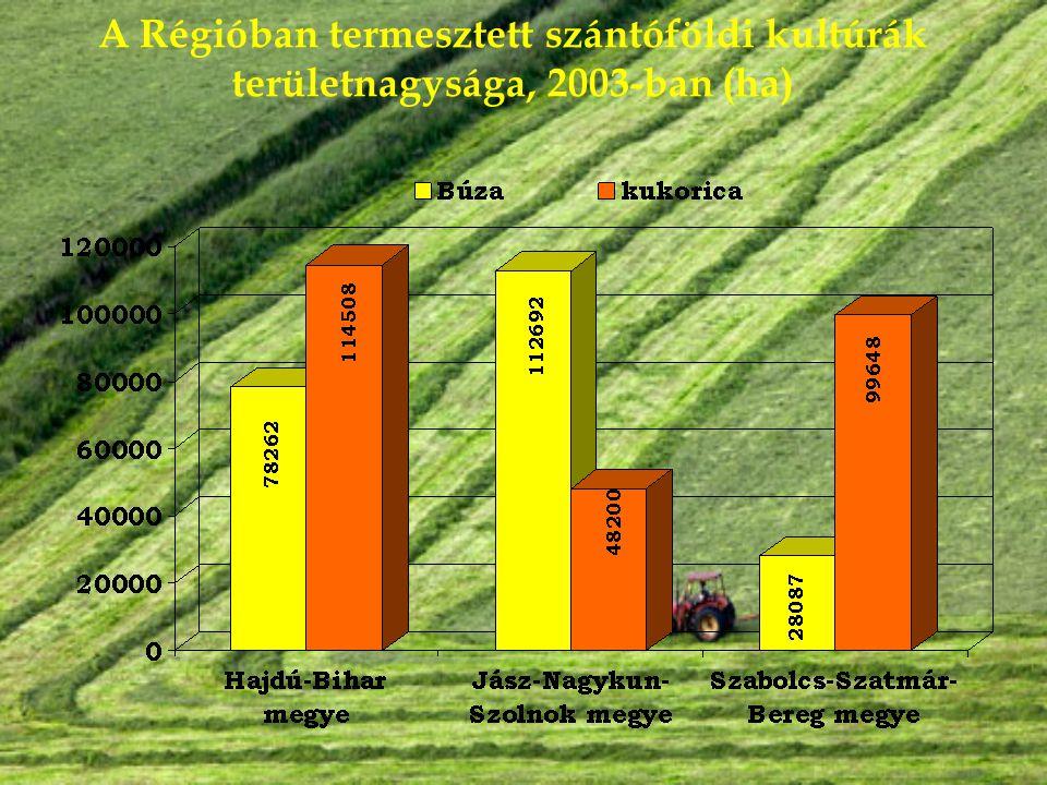 A Régióban termesztett szántóföldi kultúrák területnagysága, 2003-ban (ha)