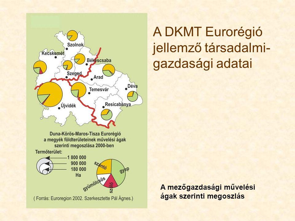 A DKMT Eurorégió jellemző társadalmi- gazdasági adatai A mezőgazdasági művelési ágak szerinti megoszlás