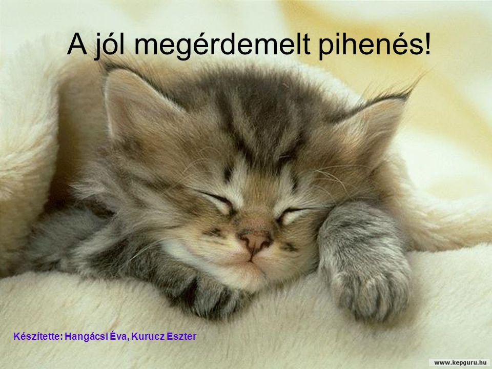A jól megérdemelt pihenés! Készítette: Hangácsi Éva, Kurucz Eszter