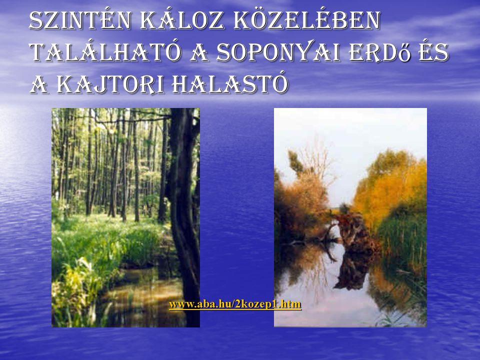 Szintén Káloz közelében található a soponyai erd ő és a kajtori halastó www.aba.hu/2kozep1.htm