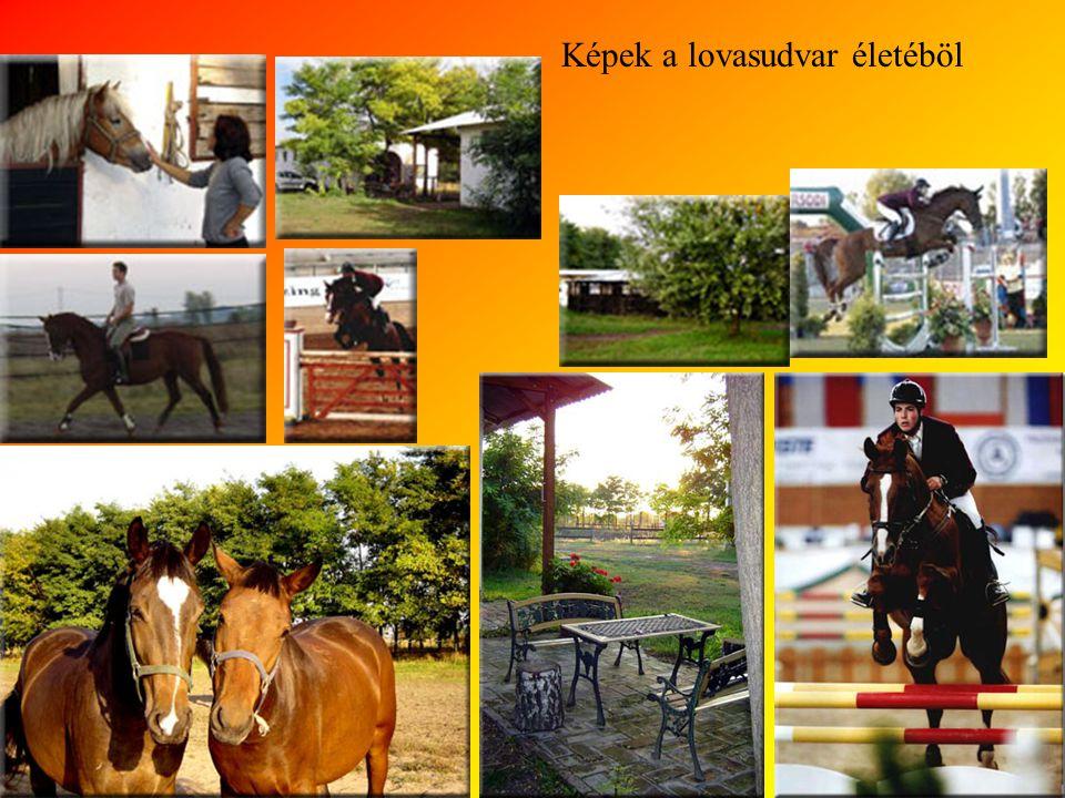 Lovas udvar szolgáltatásai Bértartás boxos istállókban, karám- és legelőhasználattal Fedett lovarda Jártatógép Egy füves és egy homokos gyakorlópálya