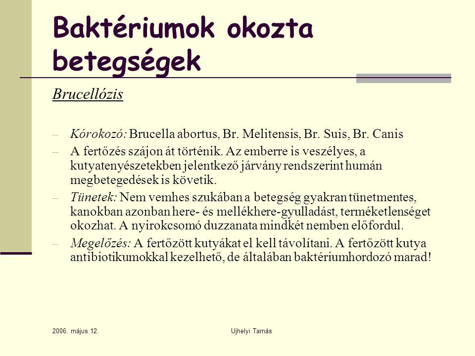 2006. május 12. Ujhelyi Tamás Baktériumok okozta betegségek Brucellózis – Kórokozó: Brucella abortus, Br. Melitensis, Br. Suis, Br. Canis – A fertőzés