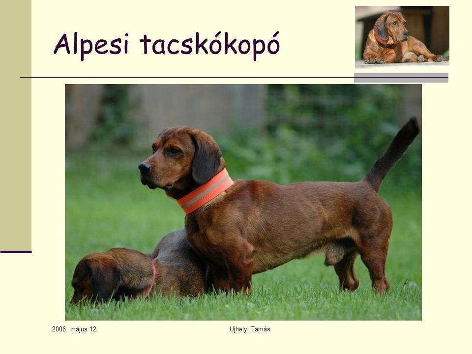 2006. május 12. Ujhelyi Tamás Alpesi tacskókopó
