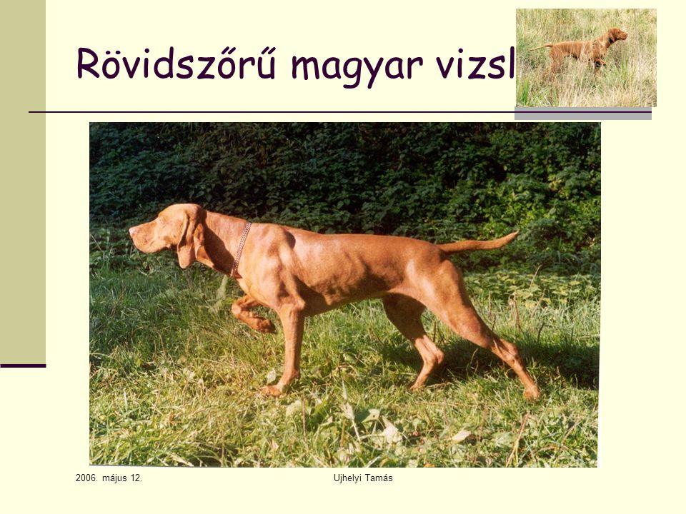 2006. május 12. Ujhelyi Tamás Rövidszőrű magyar vizsla