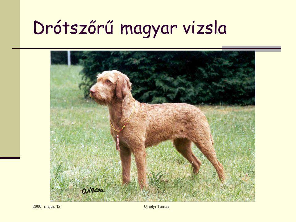 2006. május 12. Ujhelyi Tamás Drótszőrű magyar vizsla