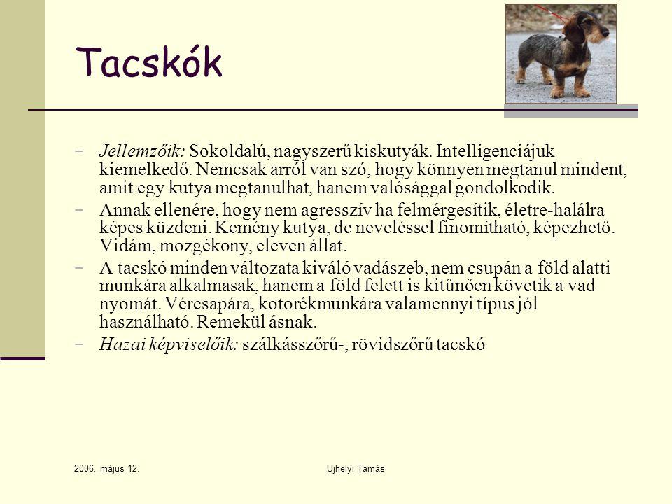 2006.május 12. Ujhelyi Tamás Tacskók − Jellemzőik: Sokoldalú, nagyszerű kiskutyák.
