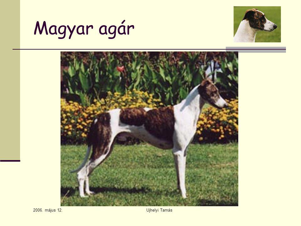 2006. május 12. Ujhelyi Tamás Magyar agár