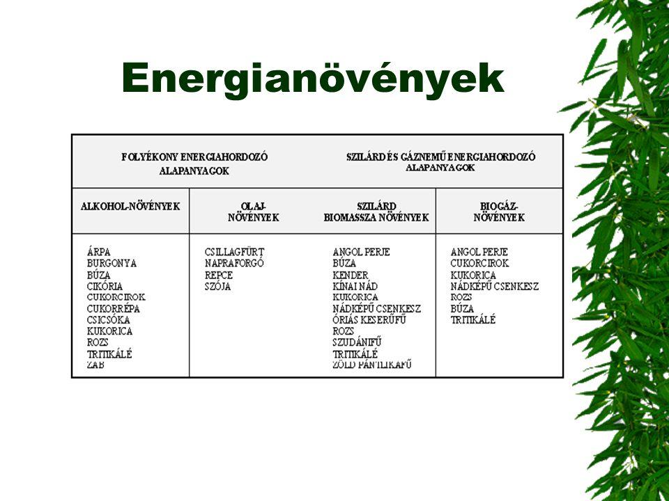 Energianövények