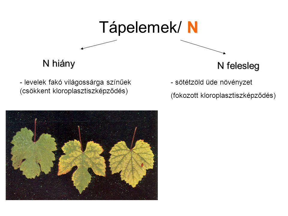 N Tápelemek/ N N hiány N felesleg - levelek fakó világossárga színűek (csökkent kloroplasztiszképződés) - sötétzöld üde növényzet (fokozott kloroplasz