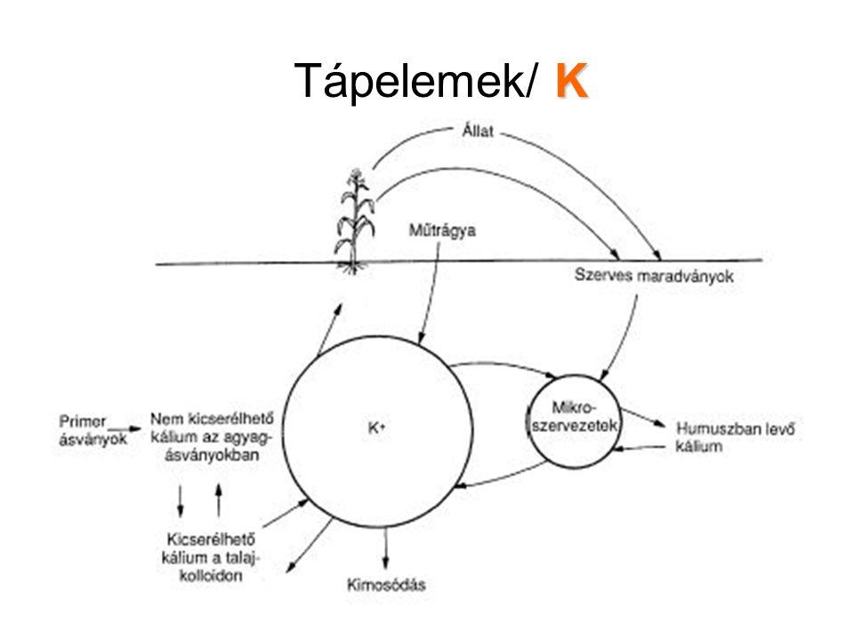 K Tápelemek/ K