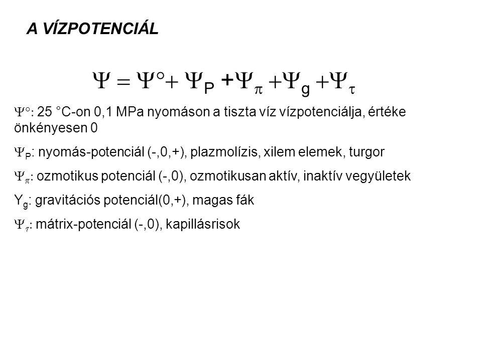 A VÍZPOTENCIÁL  P +    g    25 °C-on 0,1 MPa nyomáson a tiszta víz vízpotenciálja, értéke önkényesen 0  P : nyomás-potenciál (-,0,+), plazmolízis, xilem elemek, turgor    ozmotikus potenciál (-,0), ozmotikusan aktív, inaktív vegyületek Y g : gravitációs potenciál(0,+), magas fák    mátrix-potenciál (-,0), kapillásrisok