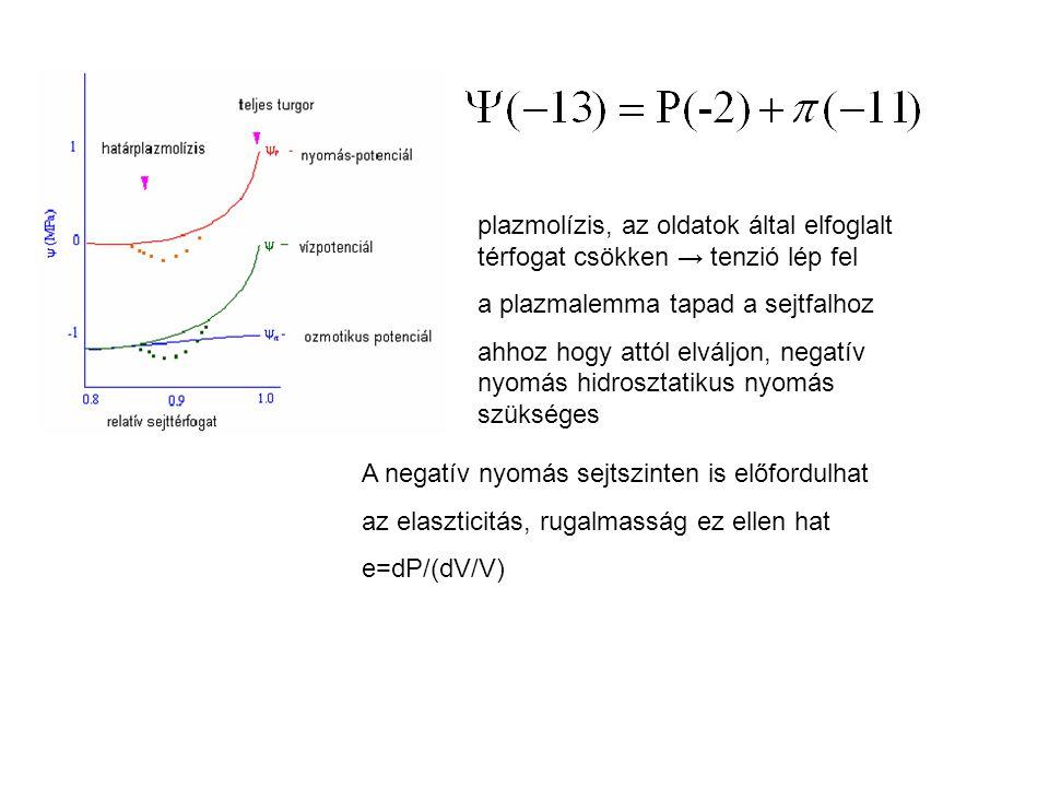 plazmolízis, az oldatok által elfoglalt térfogat csökken → tenzió lép fel a plazmalemma tapad a sejtfalhoz ahhoz hogy attól elváljon, negatív nyomás hidrosztatikus nyomás szükséges A negatív nyomás sejtszinten is előfordulhat az elaszticitás, rugalmasság ez ellen hat e=dP/(dV/V)