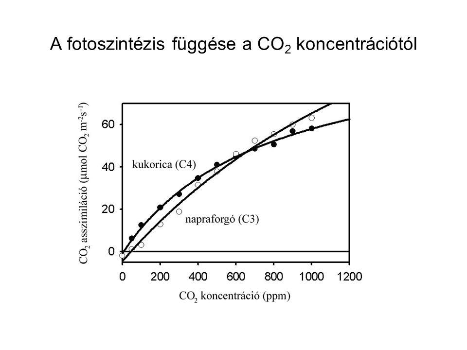 A fotoszintézis függése a CO 2 koncentrációtól