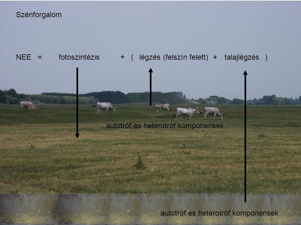fotoszintézislégzés autotróf és heterotróf komponensek NEE = + ( +) autotróf és heterotróf komponensek talajlégzés(felszín felett) Szénforgalom