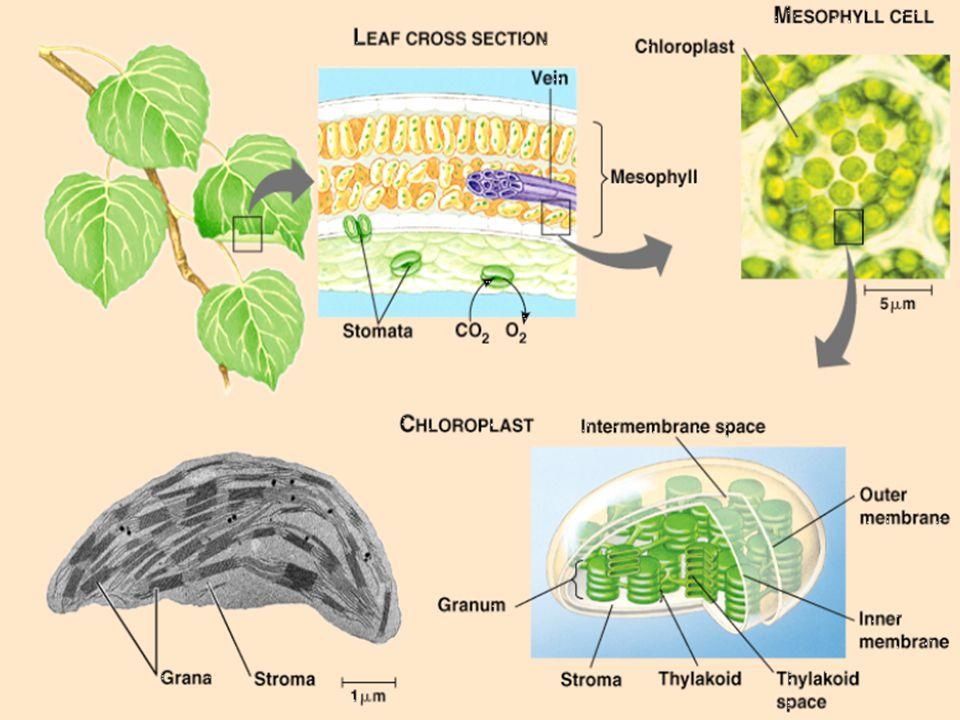Ökológiai rendszerek szénforgalma