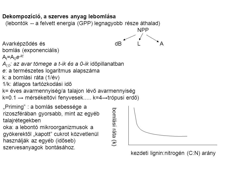 Dekompozíció, a szerves anyag lebomlása (lebontók -- a felvett energia (GPP) legnagyobb része áthalad) NPP Avarképződés és dBLA bomlás (exponenciális)