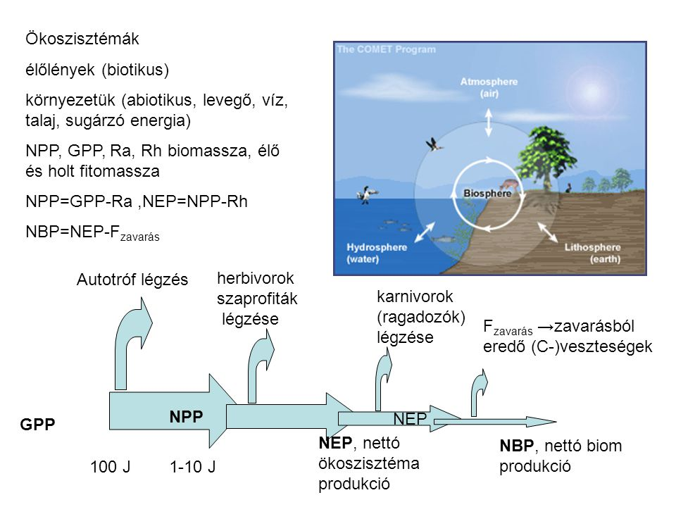 Biomassza piramis terresztris pelagikus reprodukciós ciklus hosszúrövid Energia piramis