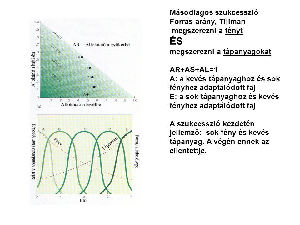 Másodlagos szukcesszió Forrás-arány, Tillman megszerezni a fényt ÉS megszerezni a tápanyagokat AR+AS+AL=1 A: a kevés tápanyaghoz és sok fényhez adaptálódott faj E: a sok tápanyaghoz és kevés fényhez adaptálódott faj A szukcesszió kezdetén jellemző: sok fény és kevés tápanyag.