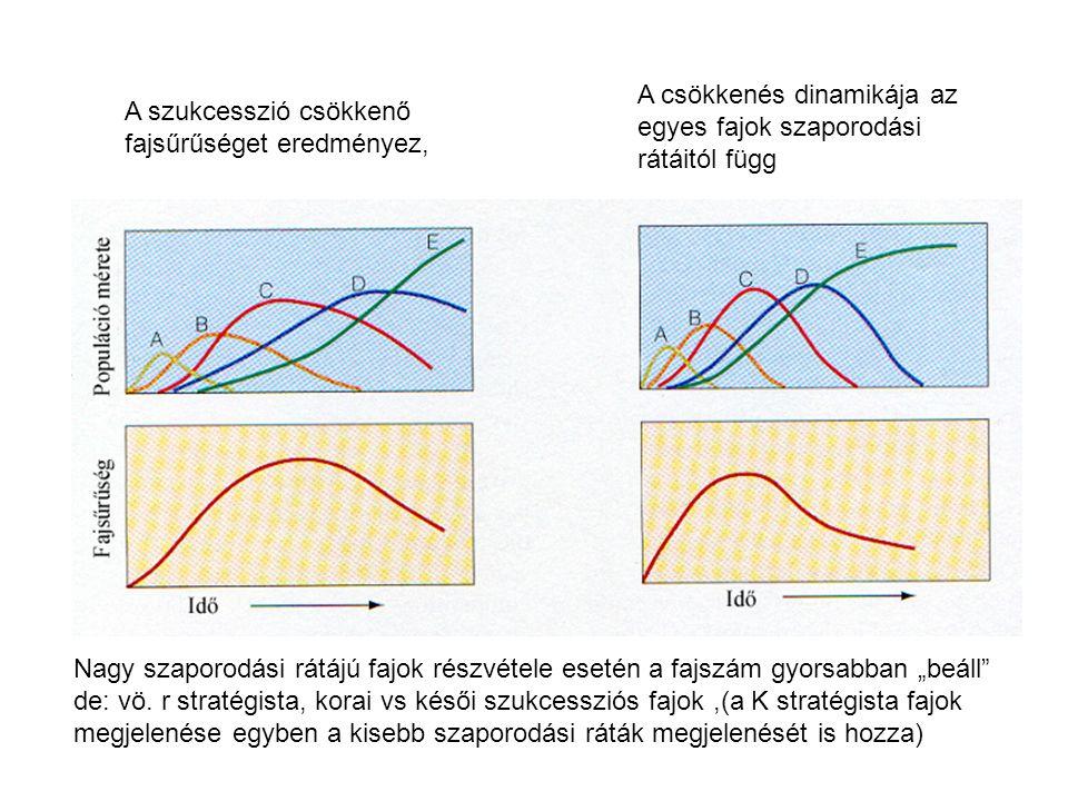 """A szukcesszió csökkenő fajsűrűséget eredményez, A csökkenés dinamikája az egyes fajok szaporodási rátáitól függ Nagy szaporodási rátájú fajok részvétele esetén a fajszám gyorsabban """"beáll de: vö."""