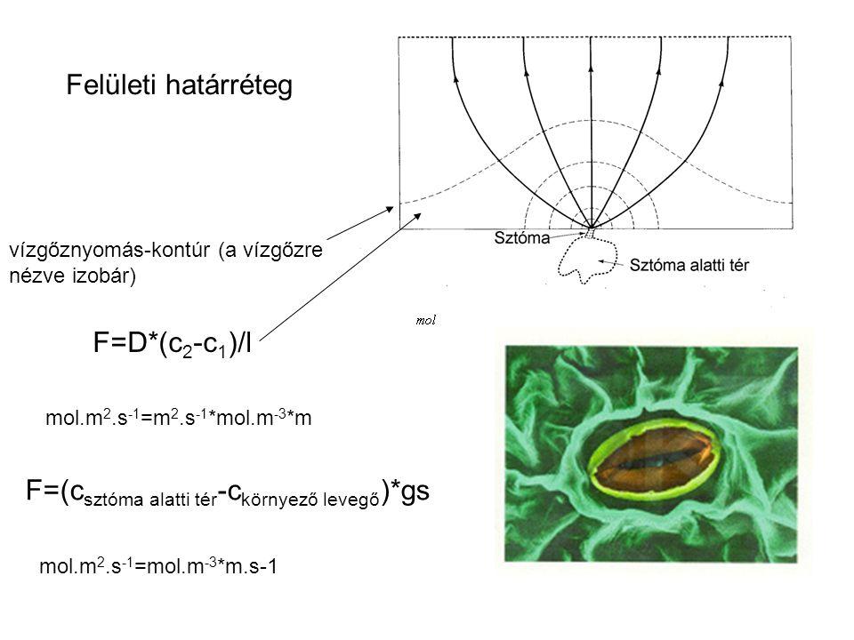 F=D*(c 2 -c 1 )/l F=(c sztóma alatti tér -c környező levegő )*gs Felületi határréteg vízgőznyomás-kontúr (a vízgőzre nézve izobár) mol.m 2.s -1 =m 2.s