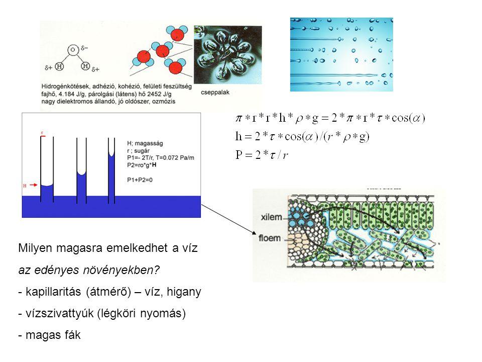 Milyen magasra emelkedhet a víz az edényes növényekben? - kapillaritás (átmérő) – víz, higany - vízszivattyúk (légköri nyomás) - magas fák