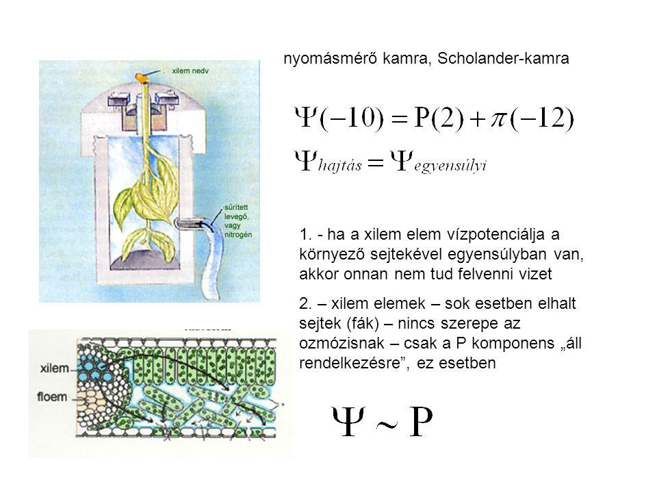 nyomásmérő kamra, Scholander-kamra 1. - ha a xilem elem vízpotenciálja a környező sejtekével egyensúlyban van, akkor onnan nem tud felvenni vizet 2. –